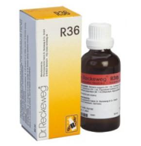 "DR. RECKEWEG R36 ד""ר רקווג טיפות"