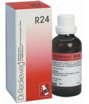 DR. RECKEWEG R24 דוקטור רקווג טיפות